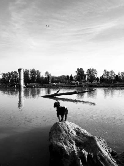 Checkers the dog at Foreshore park (South Burnaby)